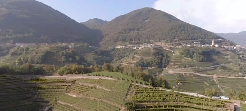 Cavit Wines – 360 Video Experience